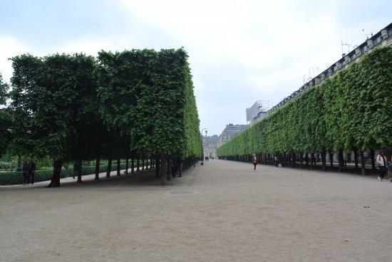 Jardin du palais royal picture of jardin du palais royal for Jardin royal