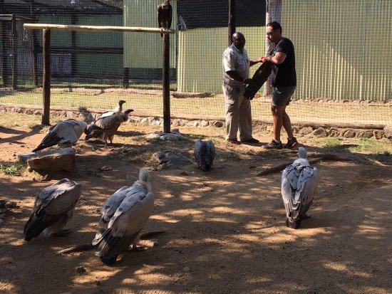 Hoedspruit, Sudáfrica: photo1.jpg