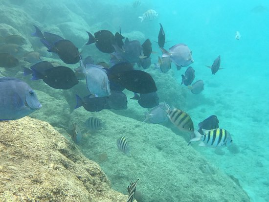 Lions Dive & Beach Resort Curacao: photo8.jpg