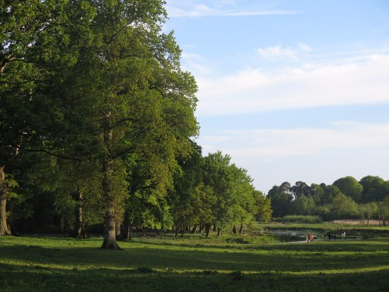 Clarencefield, UK: The grounds straight out of a John Constable painting