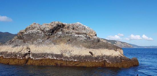 Paihia, Nueva Zelanda: The seal island