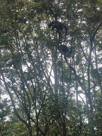Playa Hermosa, Costa Rica: monkeys