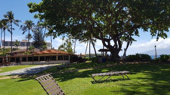Aston Maui Kaanapali Villas: На лужайке приятно загорать в тени деревьев