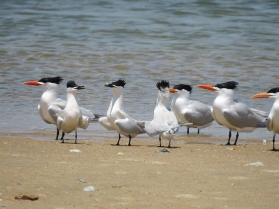 Morehead City, NC: Bird dance anybody?