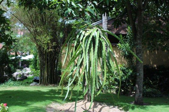 Anantara Mui Ne Resort : За чистотой территории скрывается усердный и кропотливый труд