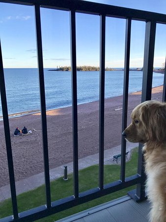 Best Western Plus Superior Inn & Suites: My service dog Lucy taking in the view.