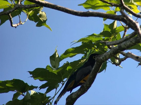 Costa Rica Jade Tours: Trogon