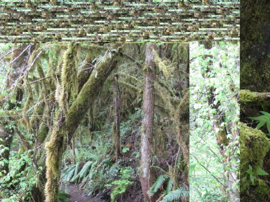 Eugene, OR: Moss
