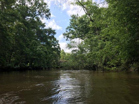 Pearl River, LA: Louisiana beauty
