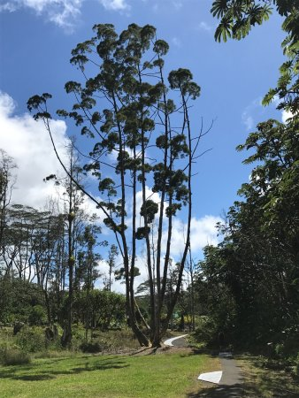Pahoa, HI: photo9.jpg