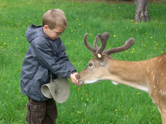 Cascade, ID: Black Pine Deer Farm, where you can see and feed the deer.