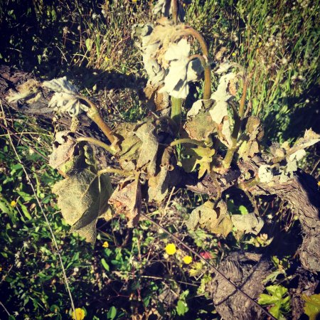 Robion, Fransa: La vie au domaine des Peyre ces derniers mois, plantation de nouvelles vignes, rénovation de La