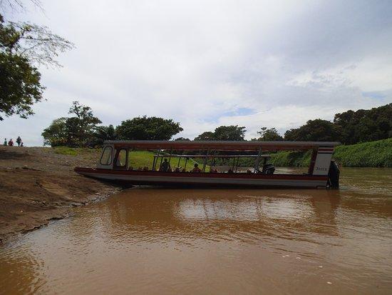 Tortuguero, Kostaryka: 05.2017