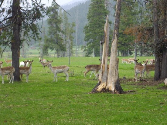 Cascade, ID: Plan to visit Black Pine Deer Farm