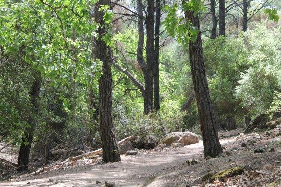 Επτά Πηγές: fairly easy access to forest walks