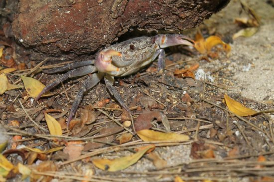 Επτά Πηγές: Quite a bit of wildlife around, even this fresh water crab