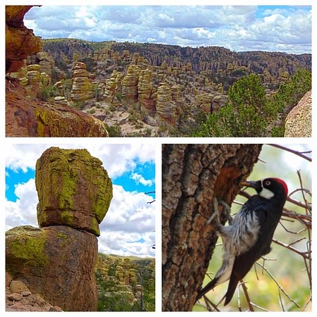 Willcox, AZ: Chiricahua National Monument Views