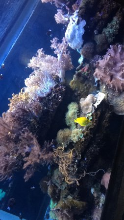uShaka Marine World: photo5.jpg