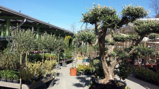 Il Garden Di Carimate