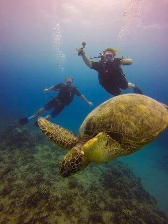 Oahu Diving: photo1.jpg