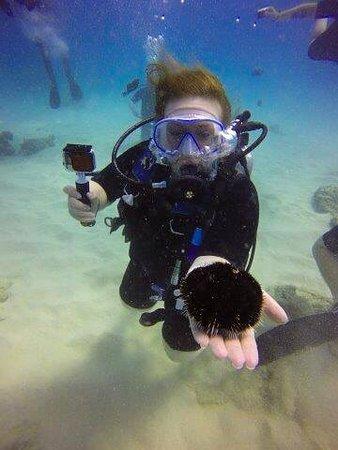 Oahu Diving: photo2.jpg