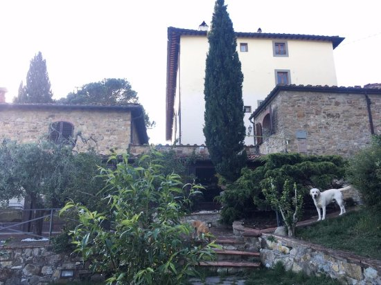 Montorsoli, Italia: La Paggeria and Gruug the dog