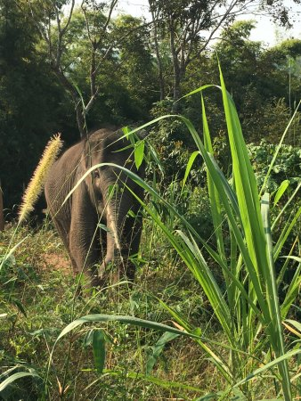Anantara Golden Triangle Elephant Camp & Resort: Walking in the hills with the elephants