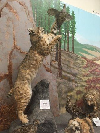 Durango fish hatchery and wildlife museum co anmeldelser for Durango fish hatchery