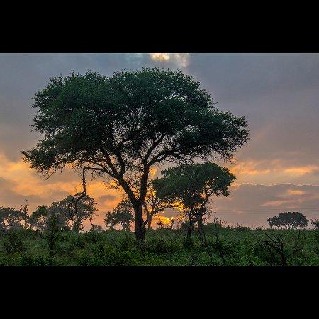 Sabie River Bush Lodge: Game Safari, ao amanhecer no Kruger Park