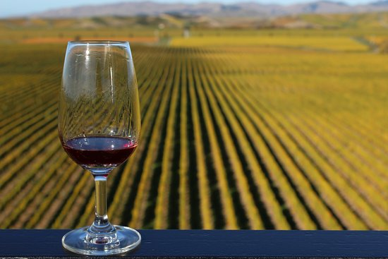 Marlborough Wine Tours
