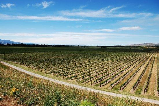 بلينهيم, نيوزيلندا: A stunning view in Marlborough