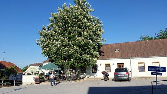 Ganserndorf, Austria: Gasthof zum Grünen Baum - Traumwetter