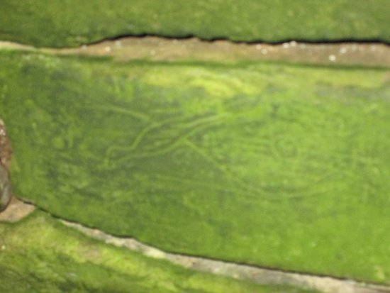 Stenness, UK: The bird carving on the lintel