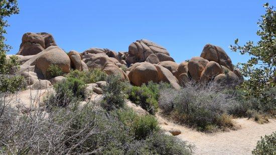 Twentynine Palms, CA: Tons of trails to explore