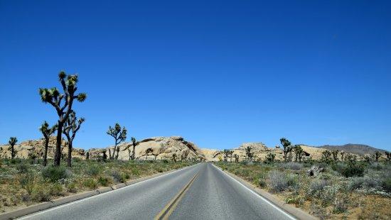 Twentynine Palms, CA: Road view...