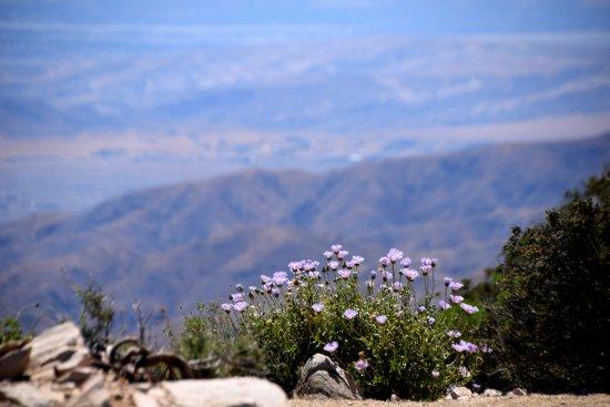 Twentynine Palms, CA: Wild Flowers
