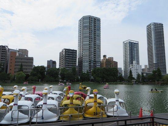 Shinobazu Pond: Laghetto intimo e romantico