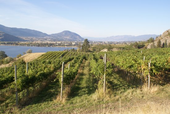 Penticton, Kanada: Vista Ridge Vineyard