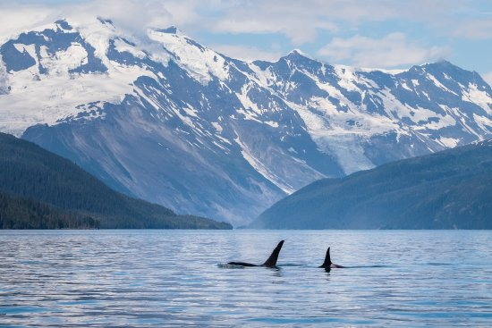 Prince William Sound Cruises Tours Whittier