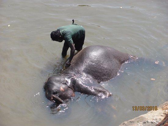 Pinnawala, Sri Lanka: Довольный !