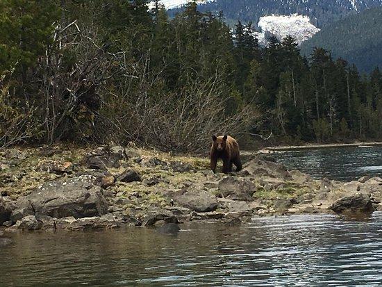 Blue River, Canada: photo0.jpg