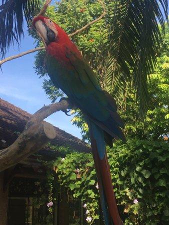 Bali Bird Park : photo3.jpg