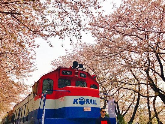 Gyeonghwa Station Cherry Blossom Road