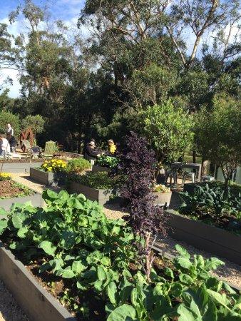 Main Ridge, Australia: Good tapas and environment!