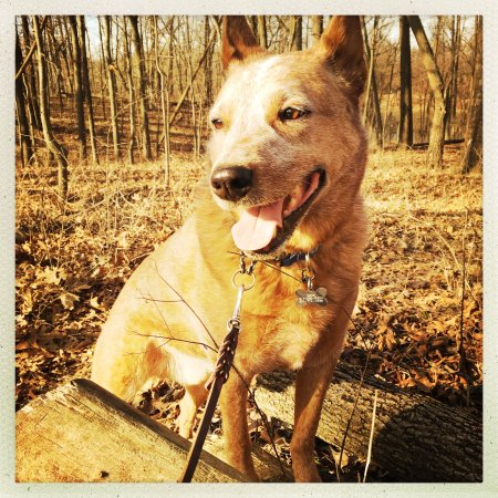 Decatur, IL: Great place for hiking with dogs!