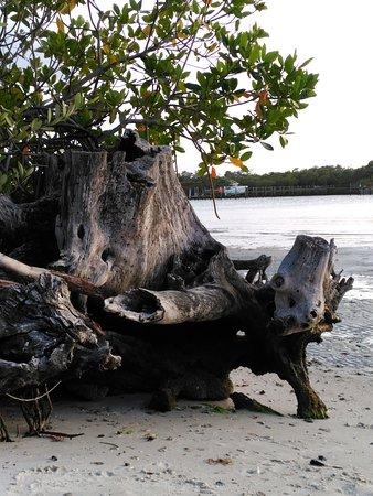 Jupiter, Φλόριντα: IMG_20170416_191828_large.jpg