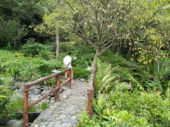 Poring, Malesia: Butterfly garden