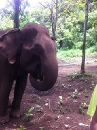 Sen Monorom, Cambodia: such a lovely experience, being so close to freely roaming elephants