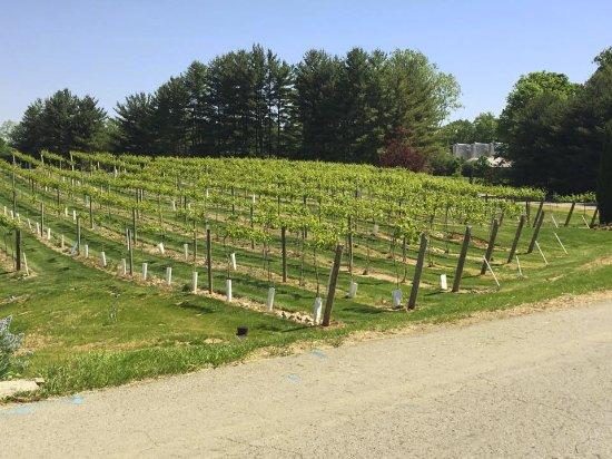 Bloomington, Индиана: the vineyards