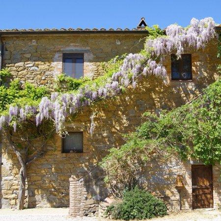 Magione, Italy: Glicine in fiore